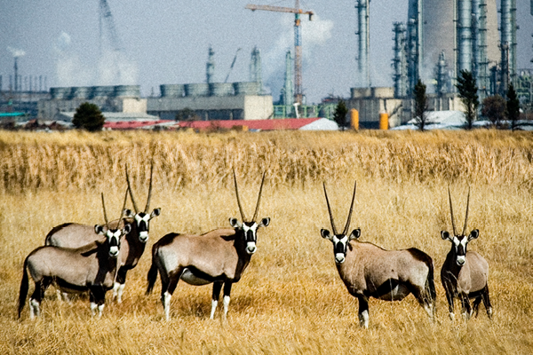 African manufacturing plant near a game reserve