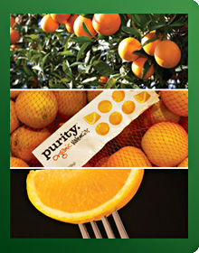 Food Logistics Oranges Supply Chain
